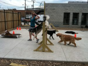 Chicago dog boot camp