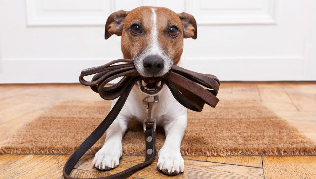 5 Rules of Being a Professional Dog Trainer